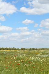 Breathe... (erregiro) Tags: sky flores field clouds countryside spring outdoor colores cielo nubes campo flowes erregiro
