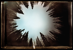 Greetings from the Devil's Pit (batuda) Tags: trees nature forest wideangle pinhole d76 6x9 lithuania cardboardbox glassplate obscura‐book diestrenge|therigorous