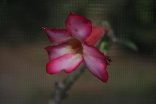 Flowerandfly_0725