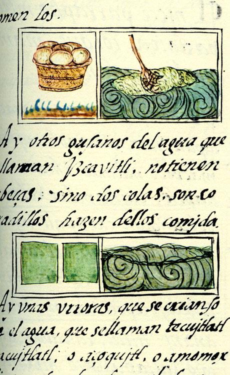 spirulina y gusanos de agua