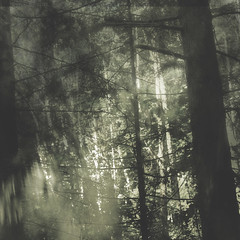 ~ North Born ~ from: Whisper of Grasses - Rumor of trees ~ (My Baby Mia) Tags: trees light texture nature forest square firstquality justimagine explored vision1000 visiongroup miadefleur imagesforthelittleprince visionqualitygroup