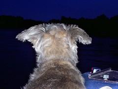 harpo flying ears