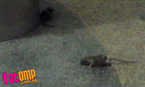 What's happening to Hougang Point festival market? Rats on rampage there!