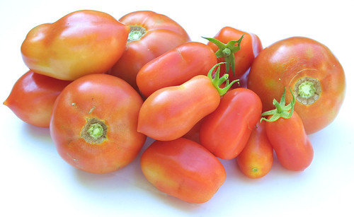 Today's tomato harvest