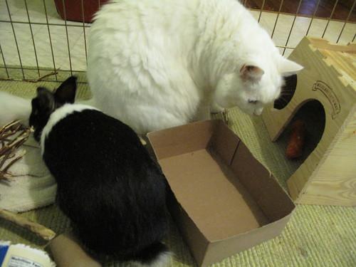 Oreo and Nilla meeting!
