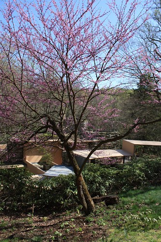 Outside Fallingwater's Guesthouse