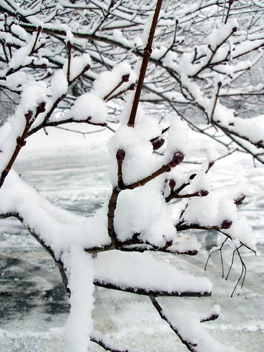 SnowTree_CloseUp_211