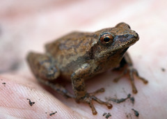"C-Falls - Spring Peeper • <a style=""font-size:0.8em;"" href=""http://www.flickr.com/photos/30765416@N06/5718286449/"" target=""_blank"">View on Flickr</a>"