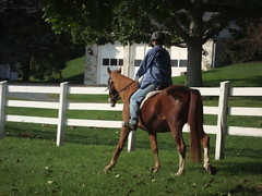 ac4h Special - Saddlebred cross (Another Chance for Horses) Tags: horse chestnut ac4hcomsaddlebred