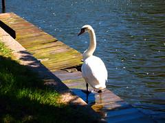 Swan River Municipality