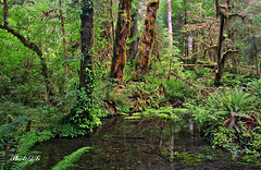 Hoh Rain Forest, Olympic National Park (PhotoDG) Tags: park usa nature rain forest washington hoh rainforest olympicpeninsula wa olympicnationalpark