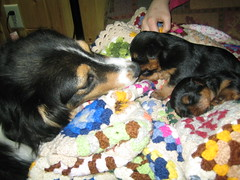 Molly, Jazz and Teddy
