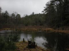 6 - Edmondson Pond