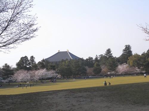 09-04-05【桜】@奈良公園-03