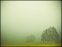 Nallingen - Easter morning (NPPhotographie) Tags: morning sun mist tree art nature fog sunrise germany landscape dust oberberg mystic mywinners platinumphoto vanagram artofimages bestcaptureaoi creatigve flickrstruereflection1 flickrstruereflection2 masterclasselite