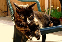 daisy (ruby.magnay) Tags: cats beautiful lazy luxury