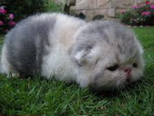 kitten137_0413011208_891799766