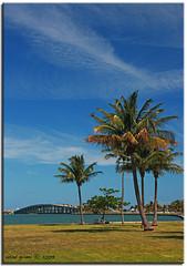 Miami (iCamPix.Net) Tags: bridge trees sky usa water clouds reflections dance nightshot dancing florida miami explore miamibeach i195 mostviewed canonef2470mmf28l 9994 miamidadecounty platinumphoto canoneos1dsmarkiii mostwatched vosplusbellesphotos juliaturtlecauseway