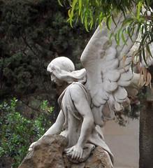 Perfil de ángel (Bellwizard) Tags: barcelona cemetery graveyard angel cementerio montjuïc ángel cementiri àngel