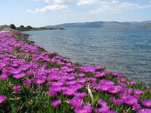 Flowers near the sea