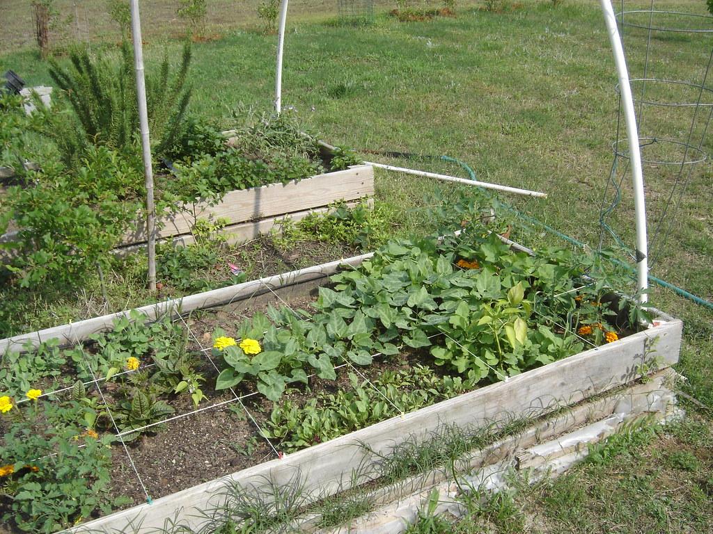 Square Foot Garden Update
