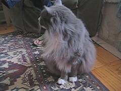Ferocious but Fluffy