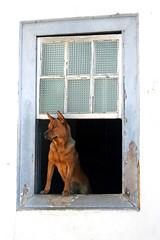 Esperando na janela... (Fabiana Velôso) Tags: minasgerais cão amigo cachorro janela espera fiel diamantina najanela duetos frenteafrente fabianavelôso