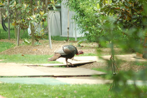 Wild Turkey headed to the wine tasting
