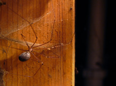 most recently posted photos of basement and cobweb flickr hive mind