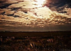Glory / Gloria (Claudio.Ar) Tags: light sunset naturaleza sun color luz sol nature clouds landscape atardecer topf75 artistic glory sony paisaje gloria nubes chapeau fields legacy dsc campos pampa tlc h9 magnumopus awesomeshot blueribbonwinner littlestories cruzadas fpg imagepoetry bej anawesomeshot goldsealofquality betterthangood theperfectphotographer landscapesdreams picswithsoul multimegashot sognidreams photoexel justproject claudioar claudiomufarrege goldenart phvalue artofimages specialspictures thedantecircle themonalisasmile imagesforthelittelprince multimegaship redmatrix bestcapturesaoi yourwonderland oracope oracobb