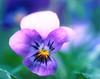Flower on the Blue (.Gianluca) Tags: pink blue italy flower dof bokeh blu simple marche jesi ciccio firstflower peregrino27macro