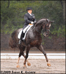 Shelly Francis and Dominion at the Festival of Champions: Gladstone, NJ (Rock and Racehorses) Tags: rain festival freestyle mud grandprix gladstone dominion slop dressage warmblood halfpass ska7159 shellyfrancis