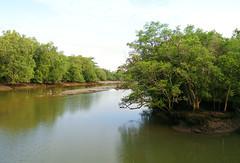 mangrove sandbank . egrets (seagreen days) Tags: trees wild green nature water birds river landscape singapore mangrove naturereserve tidal sandbank egrets sungeibuloh sbwr