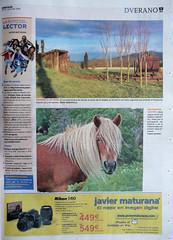 LA FOTO DEL LECTOR (tomasero) Tags: foto concurso dv 2009 yegua lector adarra peluquería crines behorra melenas sirimiri behor