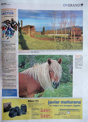 LA FOTO DEL LECTOR (tomasero) Tags: foto concurso dv 2009 yegua lector adarra peluquera crines behorra melenas sirimiri behor