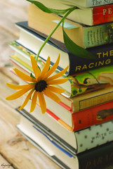 Summer Reading (Majorlight) Tags: life summer music inspiration flower classic love sunshine relax reading living escape spirit peaceful books calm literature read soul knowledge imagination novel relaxation classicalmusic instrumental blackeyedsusan bookmark introspection johannchristianbach themusicofmylife majorlight andantefromsymphonyind beautifulmusictoreadto ordoanythingto