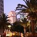 palm trees @ dusk