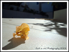 A person can be an expert in any field of knowledge or a master of many skills and achievements materials. But without cleaning it, your brain is a desert with waste. (RafaeJuli Photography) Tags: light orange sun flower luz sol day flor ground dia cho boungville
