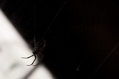 Sex and the City (iM@n) Tags: blackandwhite bw black netherlands death spider nikon fear nederland silhouettes eindhoven depressed awe ترس عنکبوت d90 اروپا هلند سیاه nikond90 تنهایی تله مشکی