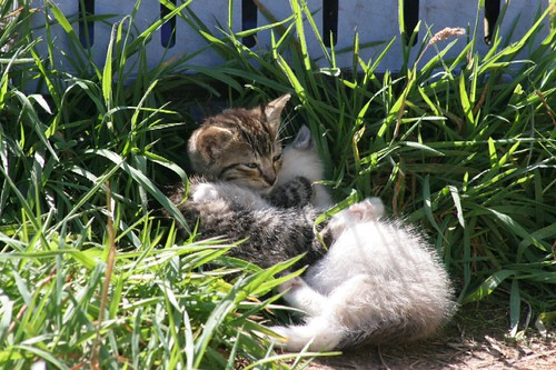 Two Feral Kittens