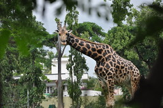 mysore zoo 1