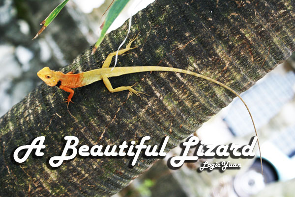 a beautiful lizard sri petaling