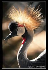144 (Ral Montufar) Tags: naturaleza animales zoologico aviario ixtapaluca mundoanimal fotoguiaorg fg28022009