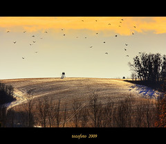 (tozofoto) Tags: trees winter light sky sun colors field birds clouds landscape gold hungary zala naturesfinest zarafa citrit theunforgettablepictures vosplusbellesphotos tozofoto superstarthebest