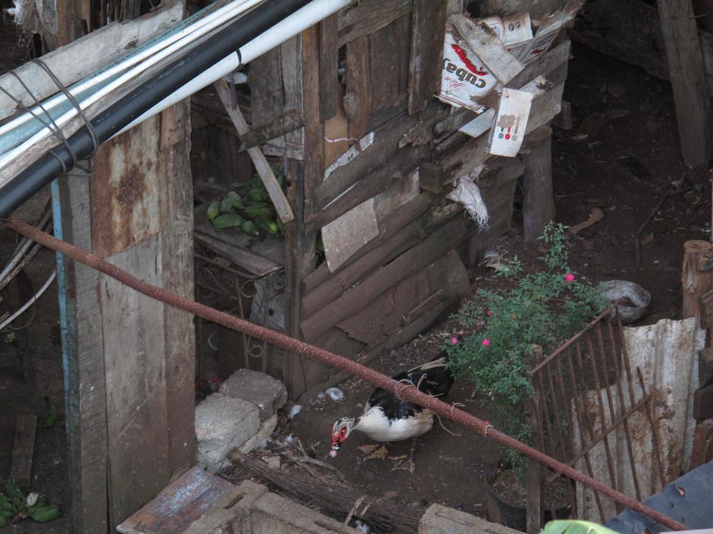 Cuba: fotos del acontecer diario - Página 6 3347423466_2153eed6a1_b