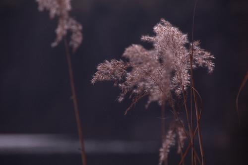 Uferflora