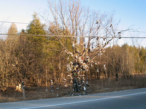 Beaverton Shoe Tree (1)