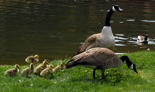 Mother Goose3