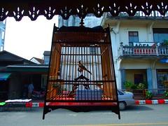 Nakon Sri Tammarat, 20/03/2009