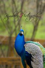 pc (kymberlybphotography) Tags: louisvillezoo